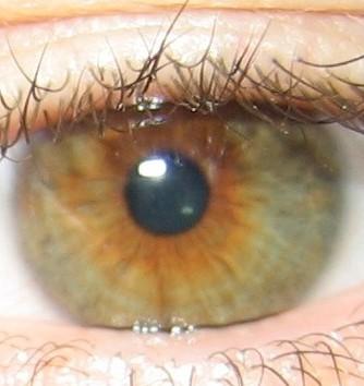 Joueb de muche les yeux marrons verts - Yeux couleur noisette ...